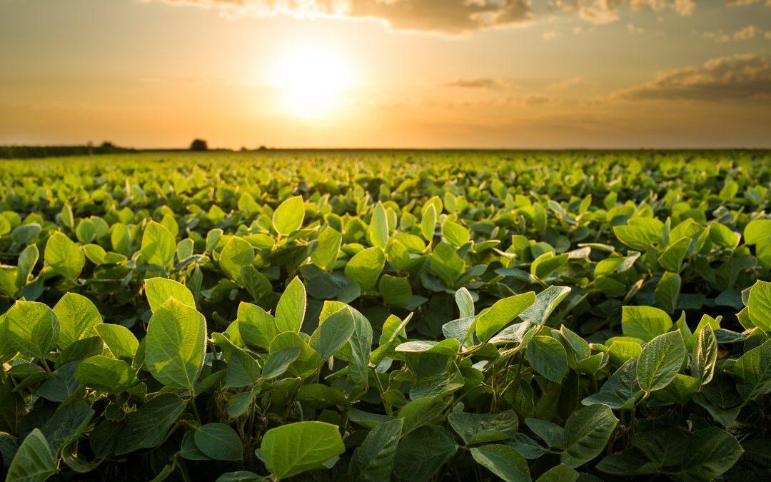 Fenseg prevê salto de 40% em venda de seguro agrícola